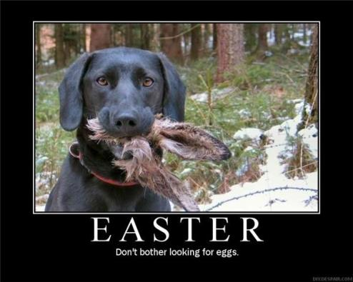 Don't bother looking for eggs.